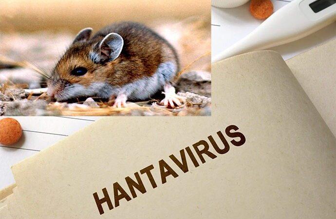 احتمال شیوع یک بیماری دیگر در چین؛ مرگ یک مرد بر اثر ابتلا به «هانتا ویروس»