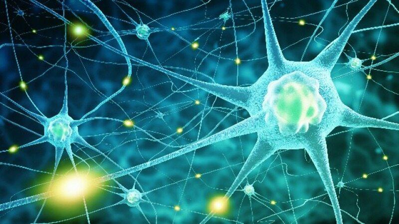 این کارها باعث کشته شدن سلول های مغزتان می شود