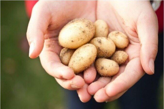 4 چیزی که فقط میتوانید با سیبزمینی تمیز کنید