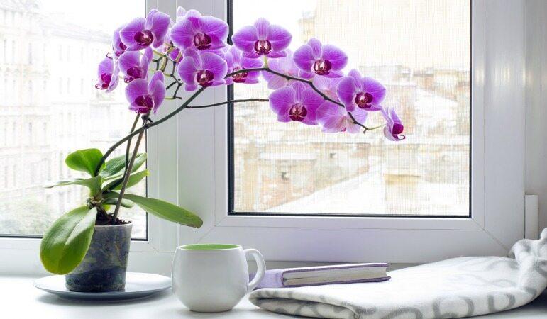 اگر خواب خوبی می خواهید این گیاهان را در اتاق خواب خود قرار دهید